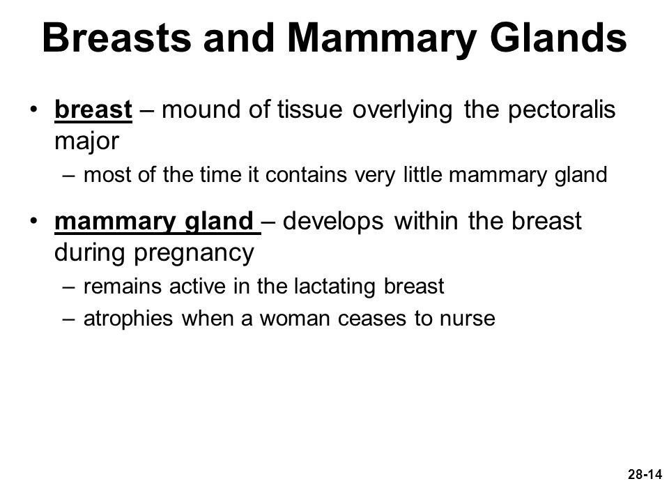 Breasts and Mammary Glands