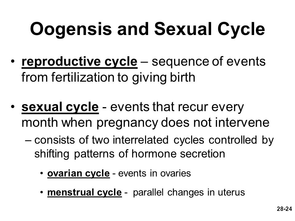 Oogensis and Sexual Cycle
