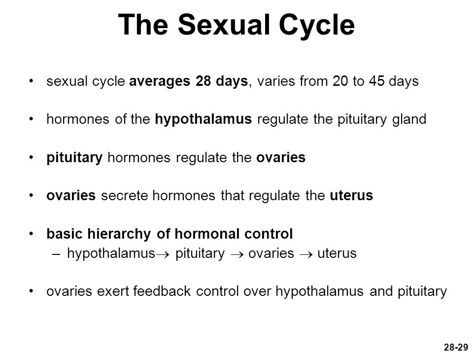 The Sexual Cycle sexual cycle averages 28 days, varies from 20 to 45 days. hormones of the hypothalamus regulate the pituitary gland.