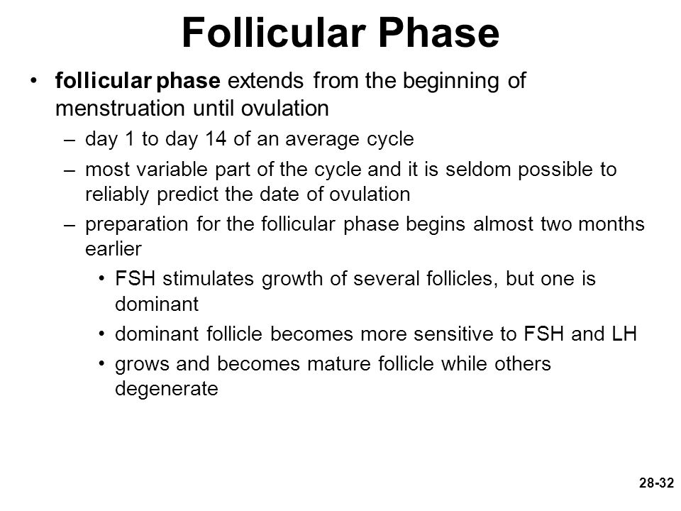 Follicular Phase follicular phase extends from the beginning of menstruation until ovulation. day 1 to day 14 of an average cycle.