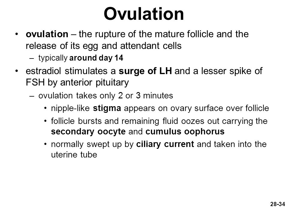 Ovulation ovulation – the rupture of the mature follicle and the release of its egg and attendant cells.