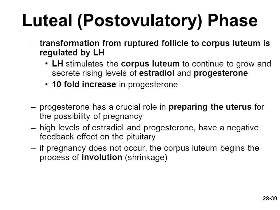 Luteal (Postovulatory) Phase