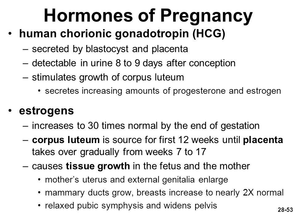 Hormones of Pregnancy human chorionic gonadotropin (HCG) estrogens