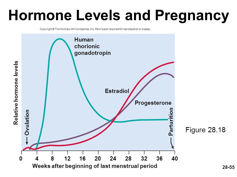 Hormone Levels and Pregnancy