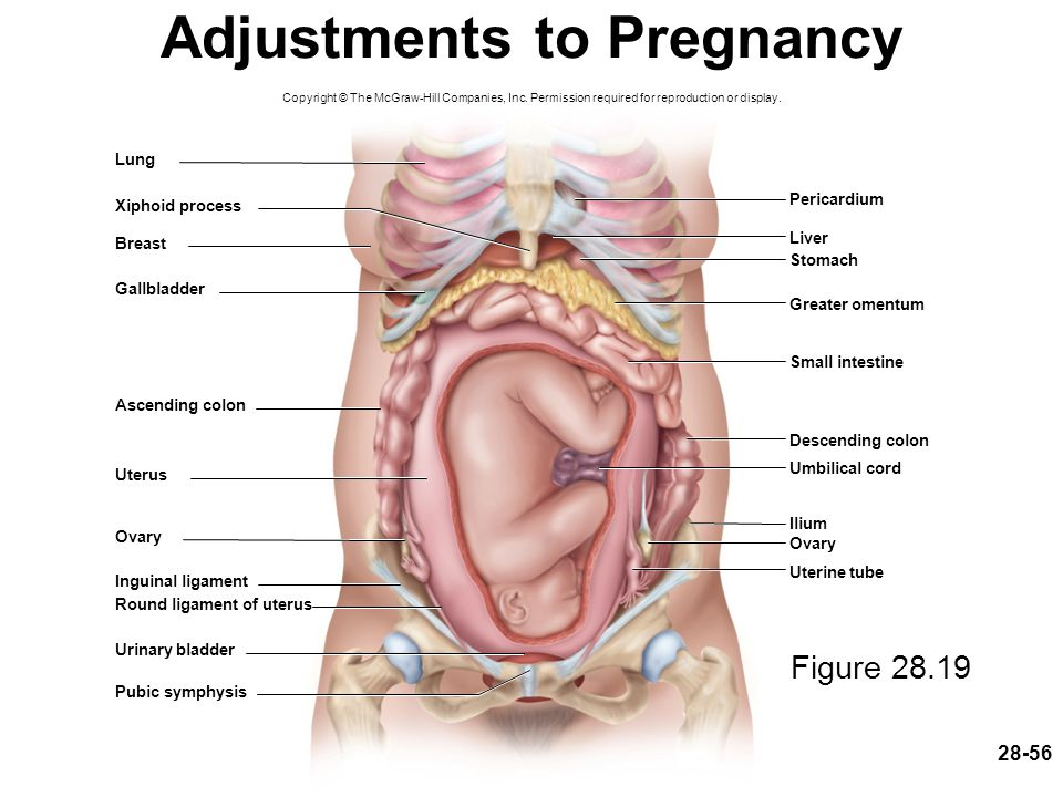 Adjustments to Pregnancy