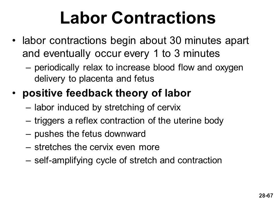 Labor Contractions labor contractions begin about 30 minutes apart and eventually occur every 1 to 3 minutes.