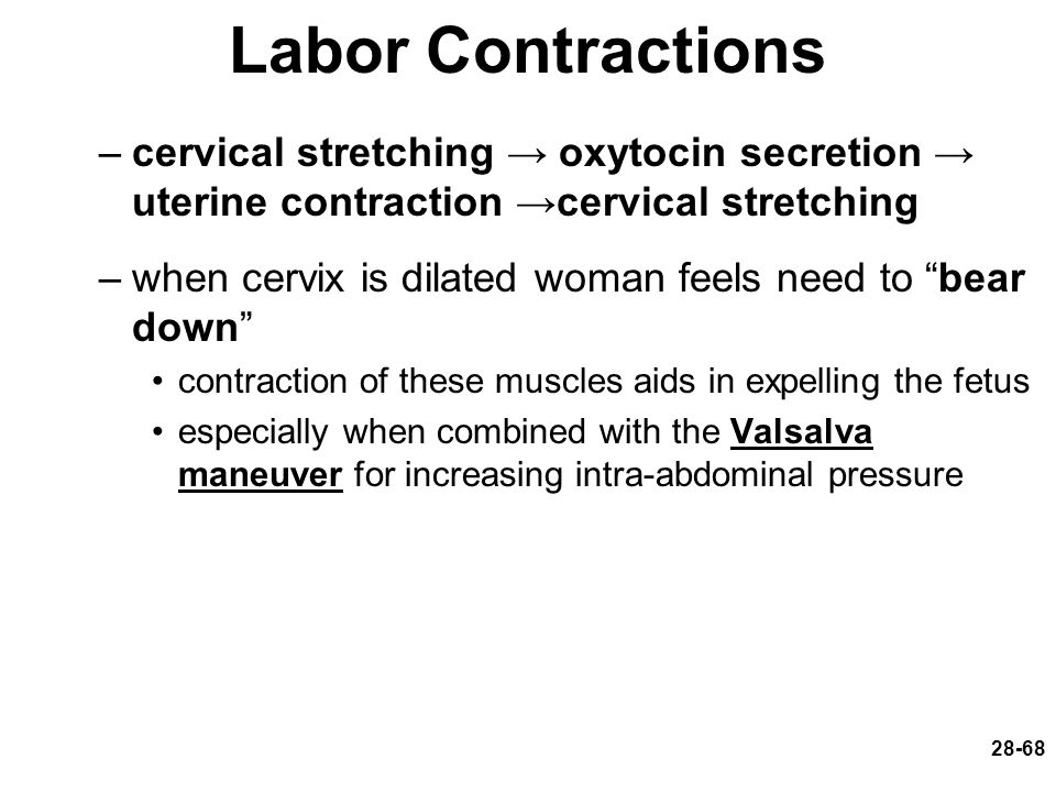 Labor Contractions cervical stretching → oxytocin secretion → uterine contraction →cervical stretching.