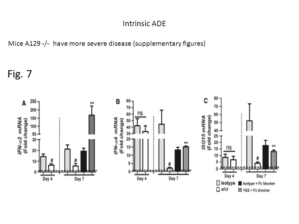 Intrinsic ADE Mice A129 -/- have more severe disease (supplementary figures) Fig. 7