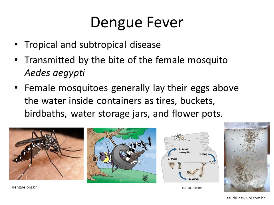 Dengue Fever Tropical and subtropical disease
