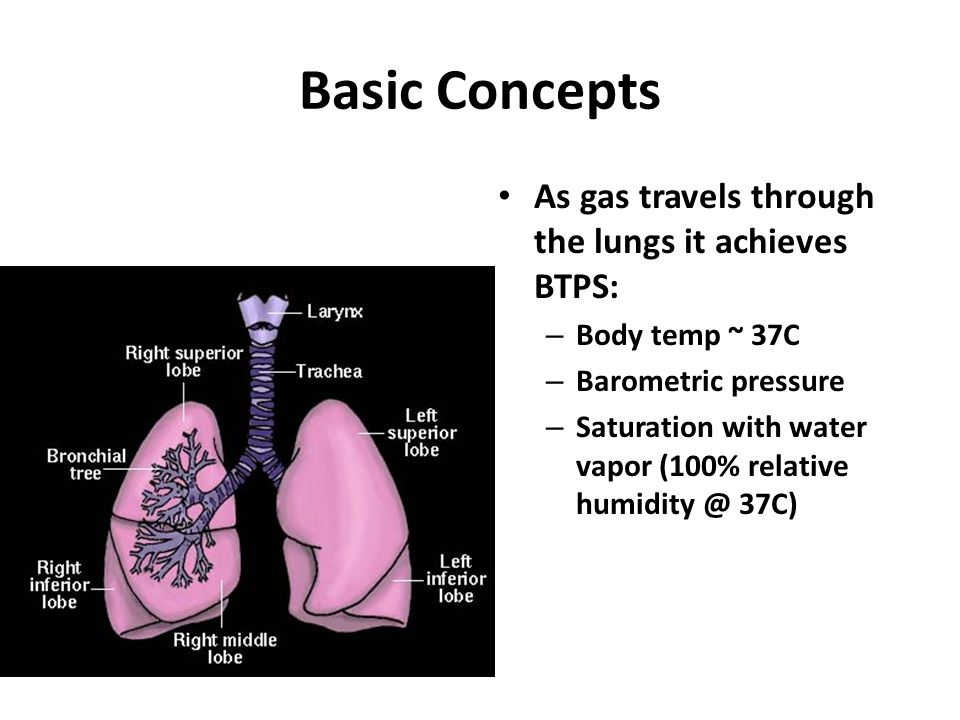 Basic Concepts As gas travels through the lungs it achieves BTPS: