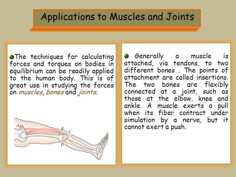 Applications to Muscles and Joints