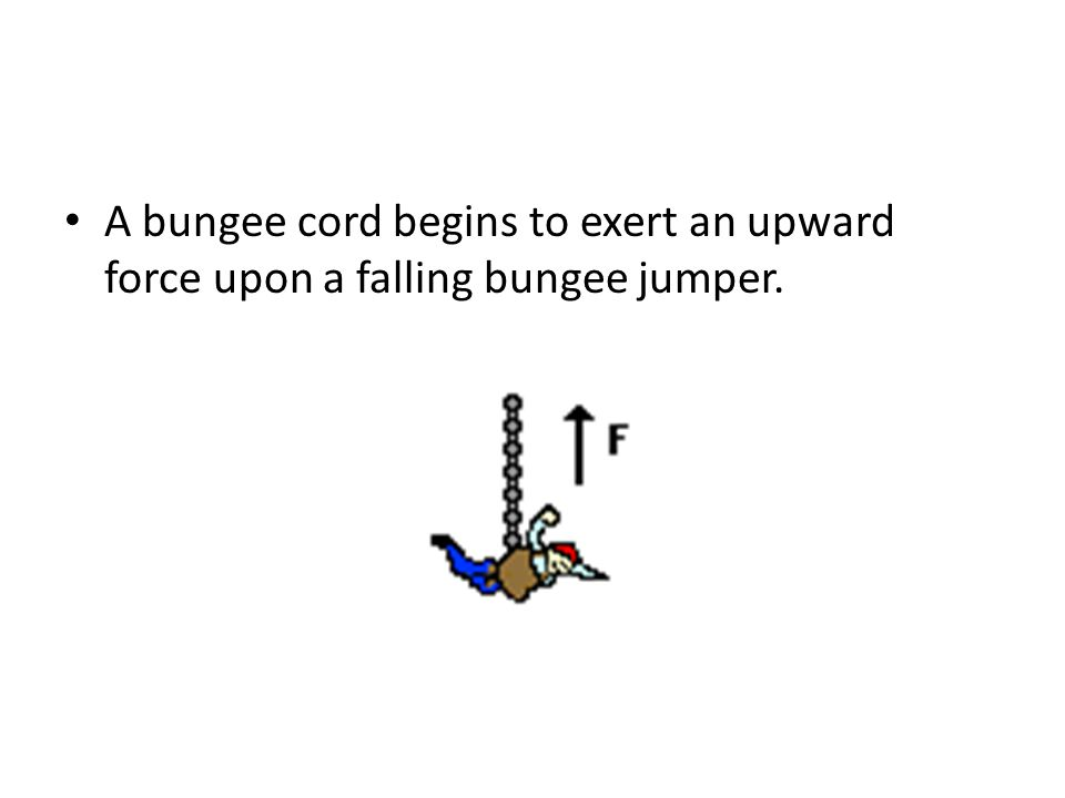 A bungee cord begins to exert an upward force upon a falling bungee jumper.