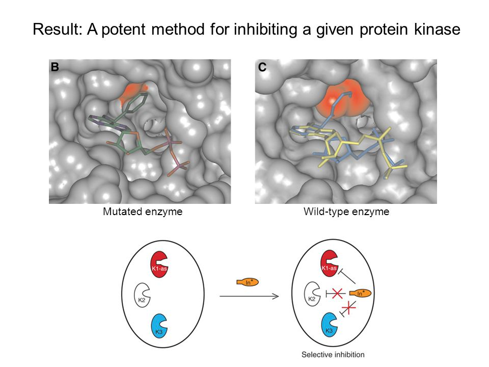 Result: A potent method for inhibiting a given protein kinase