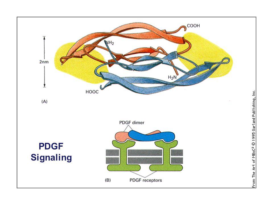 PDGF Signaling