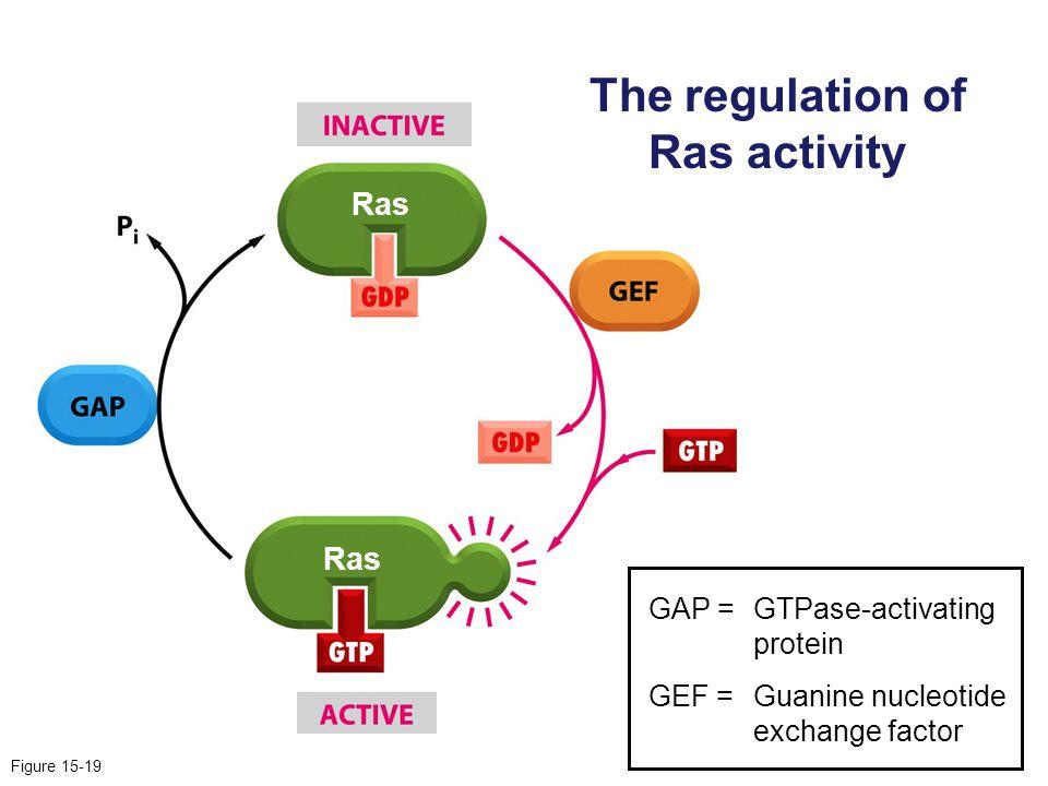 The regulation of Ras activity