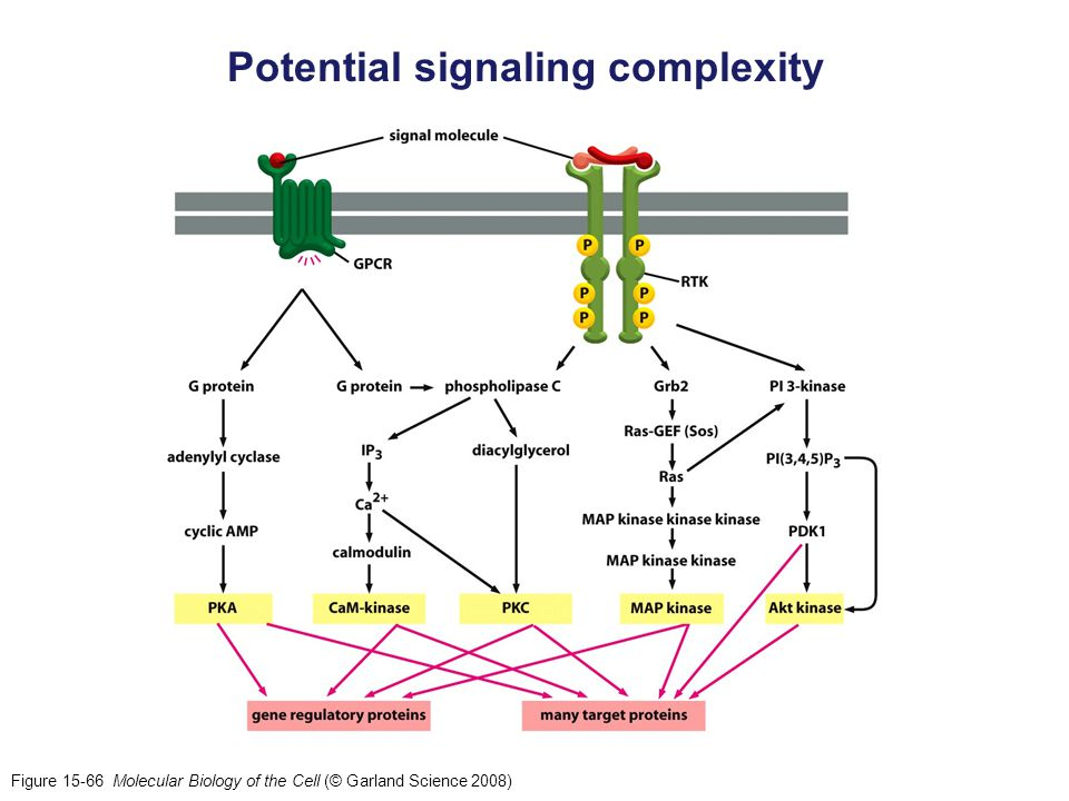 Potential signaling complexity