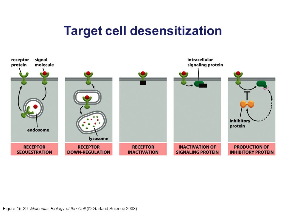 Target cell desensitization