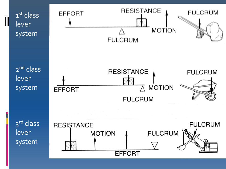 1st class lever system 2nd class lever system 3rd class lever system