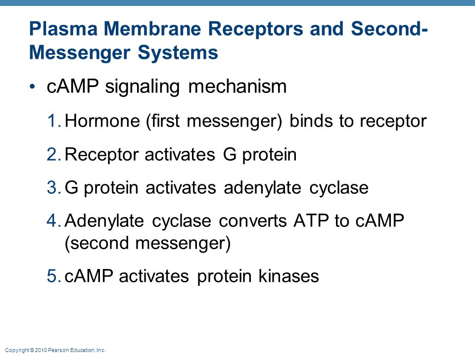 Plasma Membrane Receptors and Second-Messenger Systems