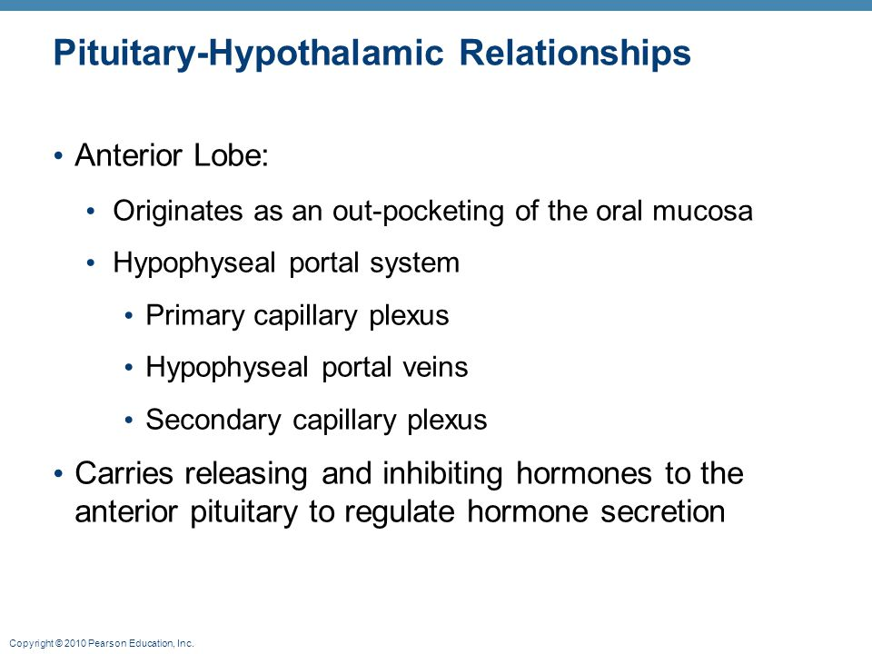 Pituitary-Hypothalamic Relationships