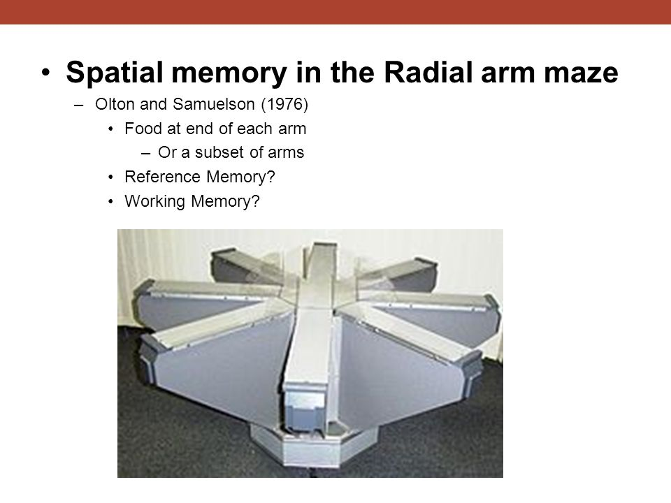 Spatial memory in the Radial arm maze