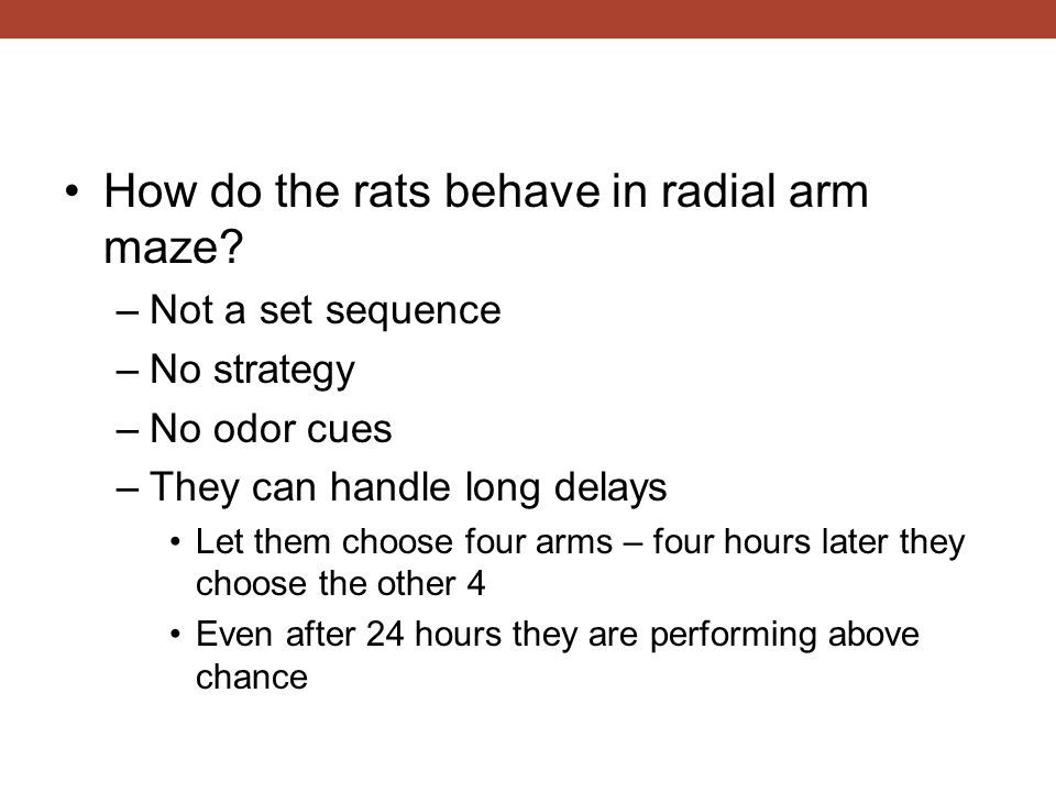 How do the rats behave in radial arm maze