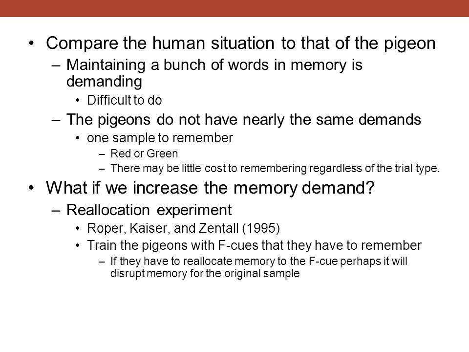 Compare the human situation to that of the pigeon