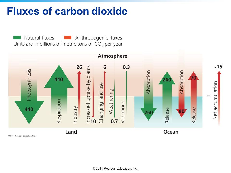 Fluxes of carbon dioxide