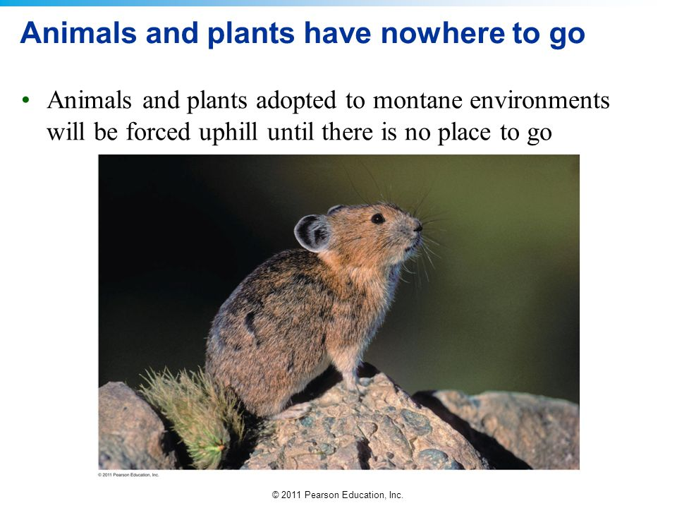 Animals and plants have nowhere to go