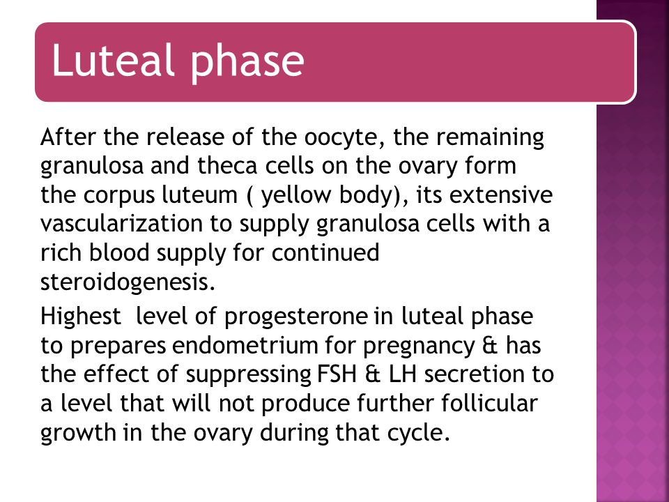 Luteal phase