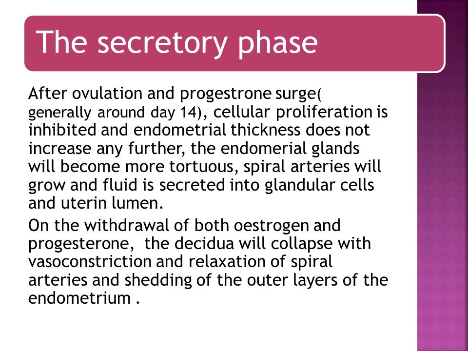 The secretory phase