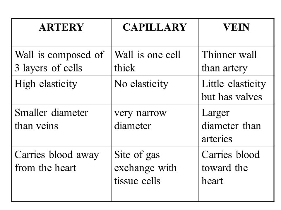 ARTERY CAPILLARY. VEIN. Wall is composed of 3 layers of cells. Wall is one cell thick. Thinner wall than artery.
