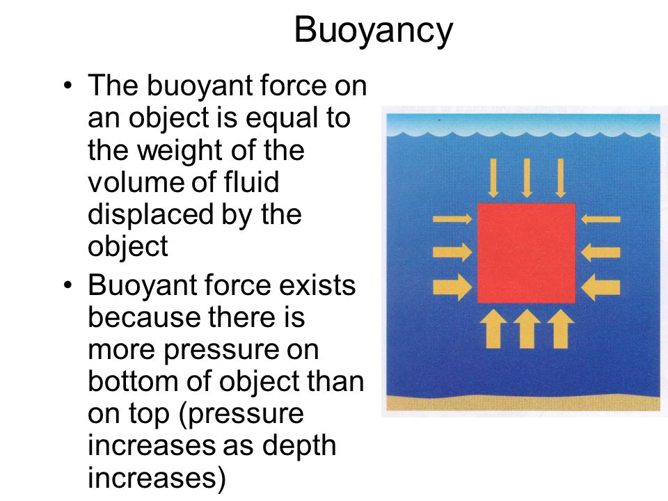 Buoyancy The buoyant force on an object is equal to the weight of the volume of fluid displaced by the object.