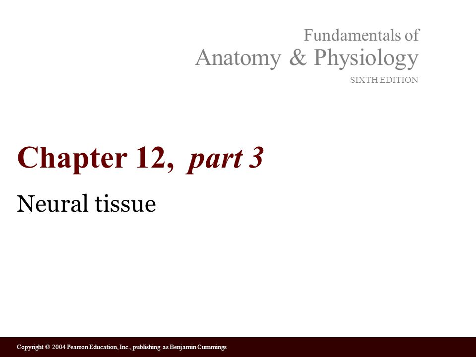 Chapter 12, part 3 Neural tissue