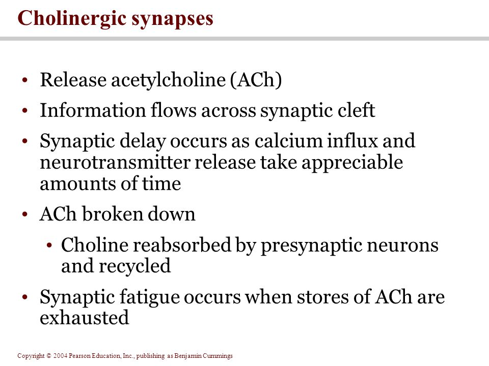 Cholinergic synapses Release acetylcholine (ACh)