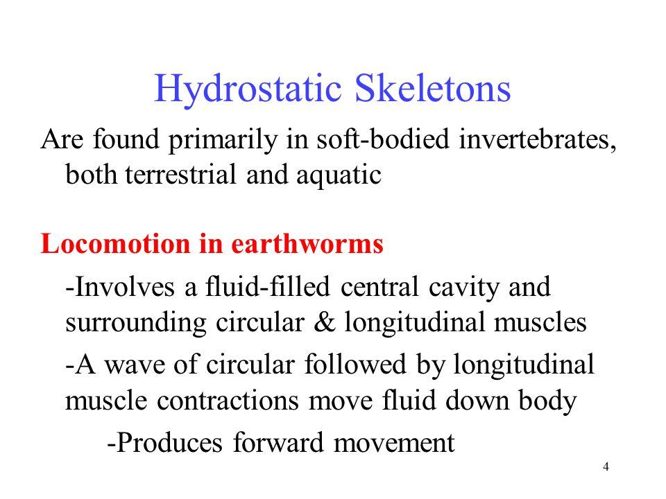 Hydrostatic Skeletons