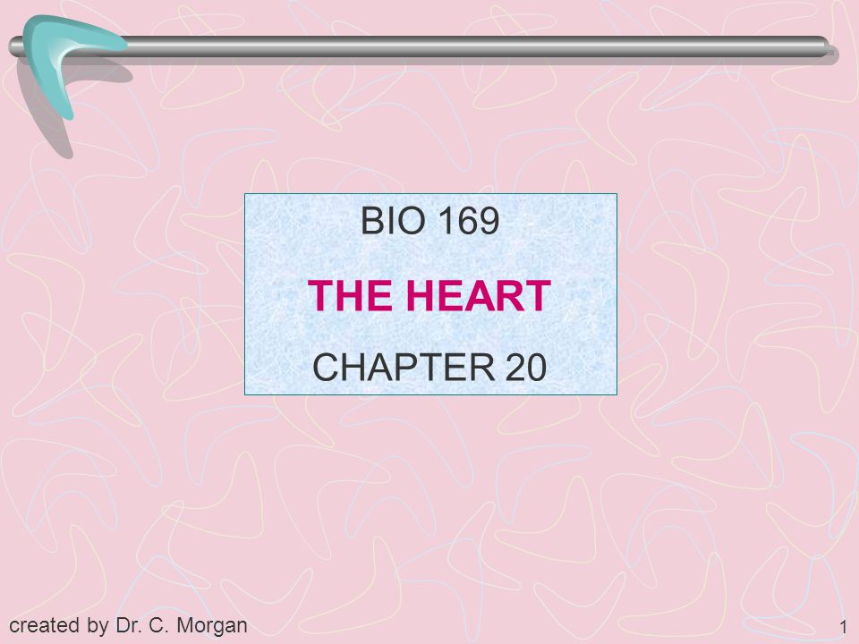 BIO 169 THE HEART CHAPTER 20 created by Dr. C. Morgan
