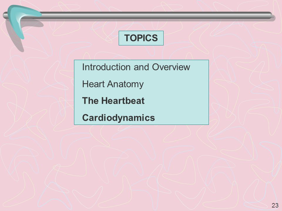 TOPICS Introduction and Overview Heart Anatomy The Heartbeat Cardiodynamics