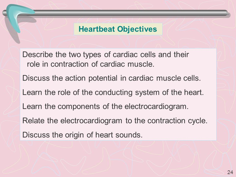 Heartbeat Objectives Describe the two types of cardiac cells and their role in contraction of cardiac muscle.
