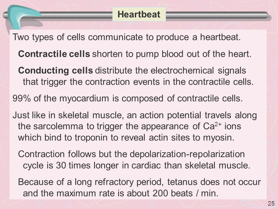 Heartbeat Two types of cells communicate to produce a heartbeat. Contractile cells shorten to pump blood out of the heart.