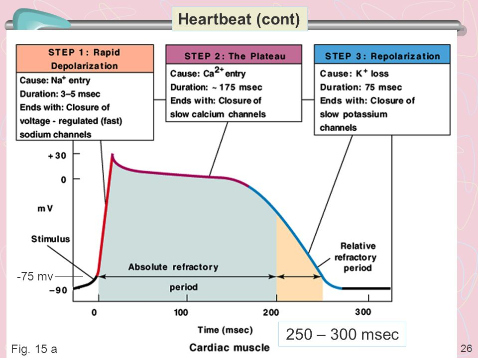 Heartbeat (cont) -75 mv 250 – 300 msec Fig. 15 a