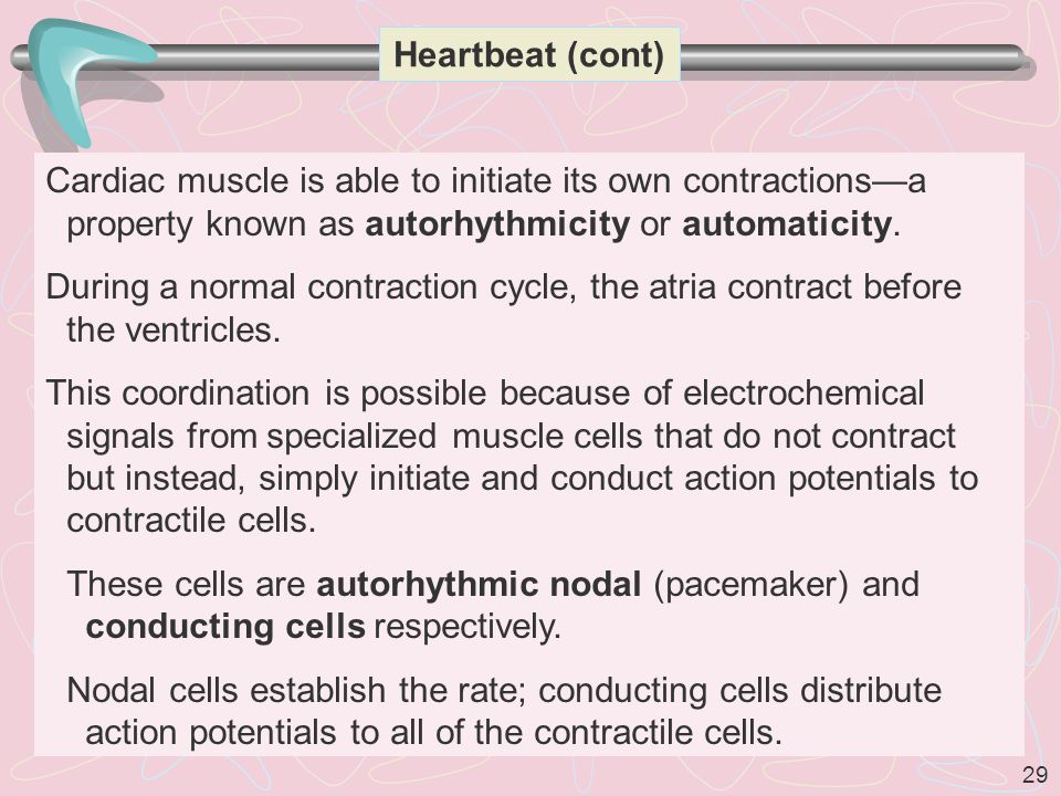 Heartbeat (cont) Cardiac muscle is able to initiate its own contractions—a property known as autorhythmicity or automaticity.