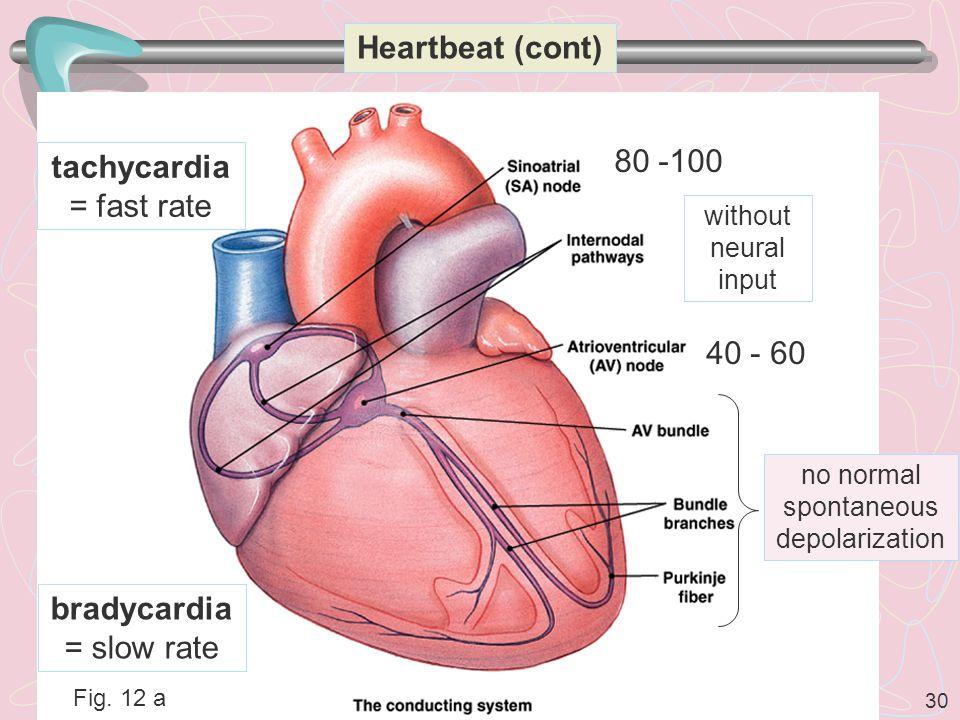 tachycardia = fast rate 80 -100