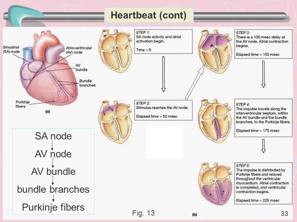 Heartbeat (cont) SA node AV node AV bundle bundle branches