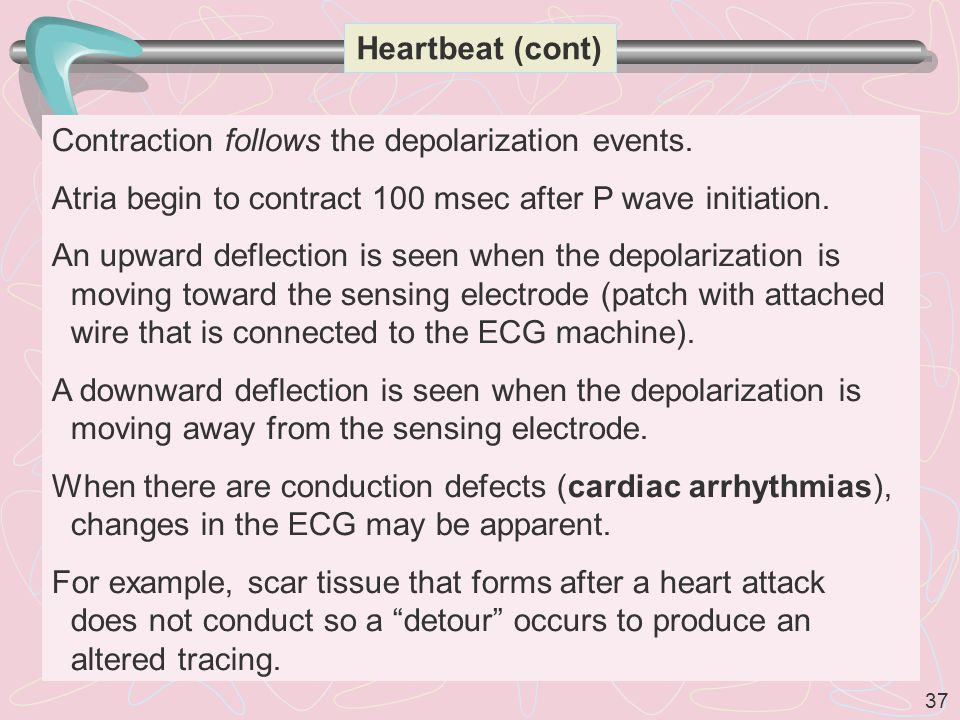 Heartbeat (cont) Contraction follows the depolarization events. Atria begin to contract 100 msec after P wave initiation.