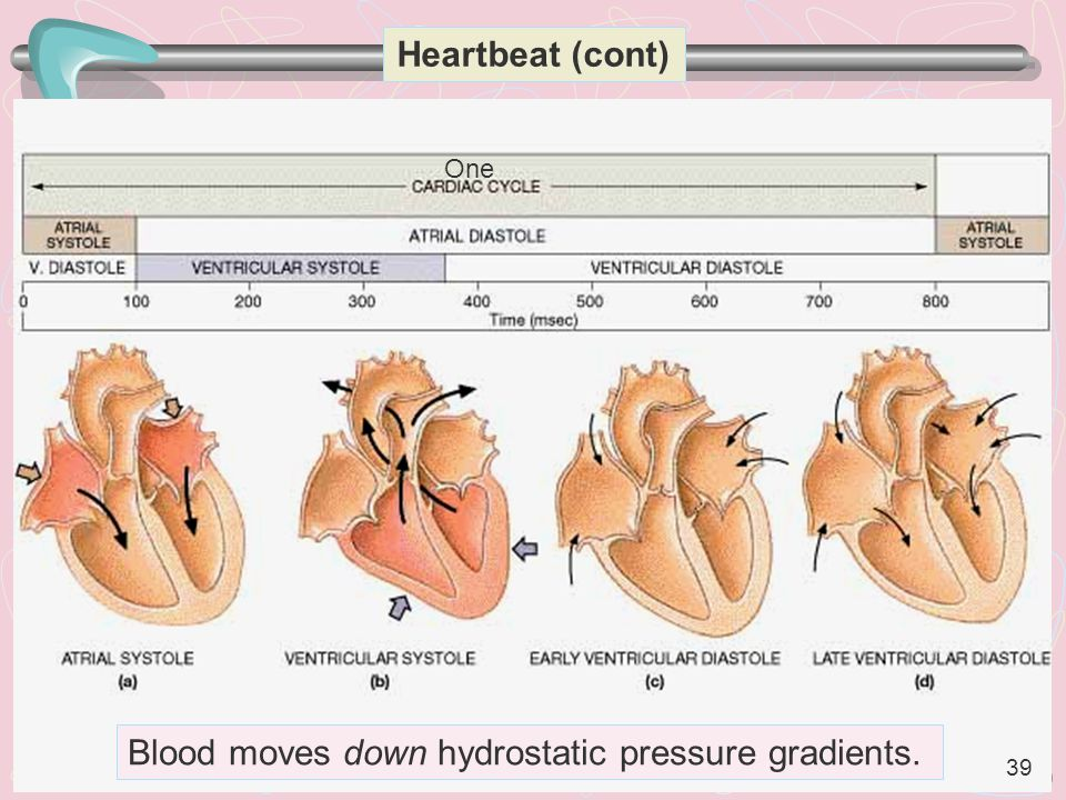 Blood moves down hydrostatic pressure gradients.