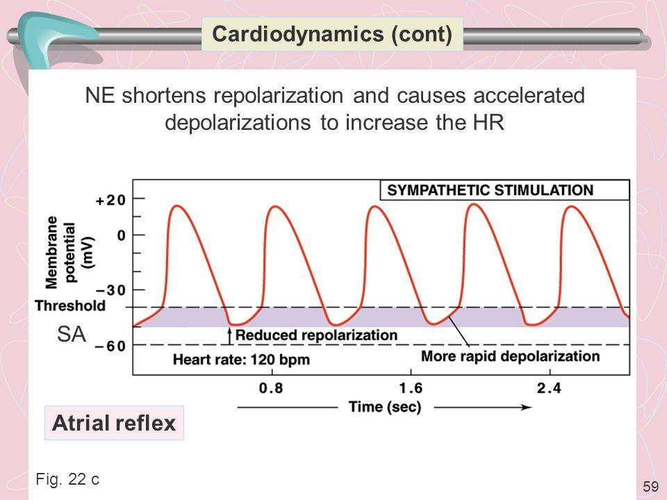 Cardiodynamics (cont)