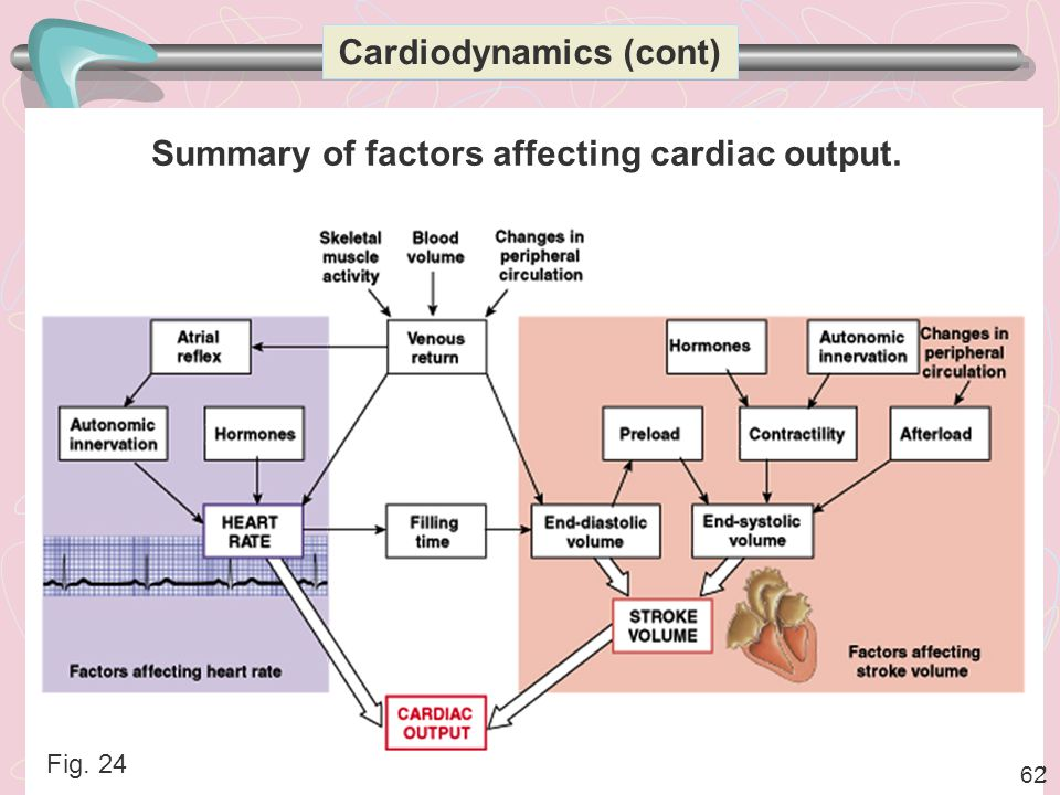 Cardiodynamics (cont) Summary of factors affecting cardiac output.