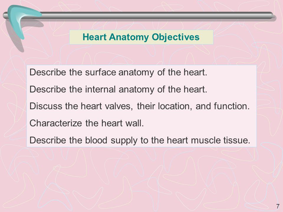 Heart Anatomy Objectives