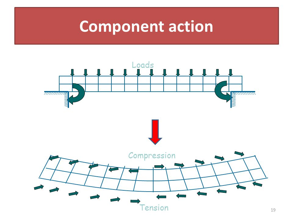 Component action Loads Tension Compression 19
